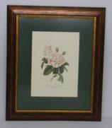 Floral & Plant 6  (Code: FP6P1)