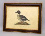 Ζώα & Πουλιά 11  (ΚΩΔ: ΑΒ11M)