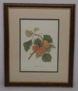 Φρούτα 3  (ΚΩΔ: F3MP2)