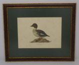 Ζώα & Πουλιά 11  (ΚΩΔ: ΑΒ11MP1)