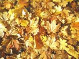 Fall / Autumn ( Code : DFA6 )