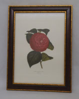 Floral & Plant 7  (Code: FP7M)