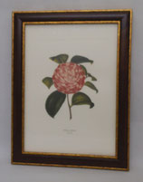 Floral & Plant 5 (Code: FP5M)
