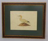 Ζώα & Πουλιά 13 (ΚΩΔ: ΑΒ13MP1)