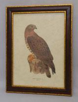 Animal & Bird  6  (Code: AB6M)