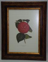 Floral & Plant 7  (Code: FP7)