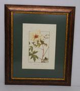 Floral & Plant 22  (Code: FP22P1)