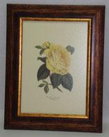 Floral & Plant 1   (Code: FP1)