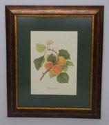 Fruit 3  (Code: F3P1)