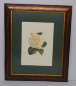 Floral & Plant 3  (Code: FP3P1)