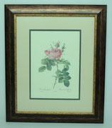 Floral & Plant 12  (Code: FP12P2)