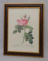 Floral & Plant 12  (Code: FP12M)