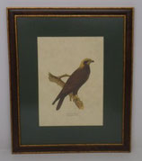 Ζώα & Πουλιά 5  (ΚΩΔ: ΑΒ5MP1)