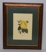Floral & Plant 1   (Code: FP1P1)