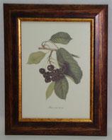 Φρούτα 7  (ΚΩΔ: F7)