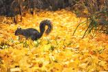 Fall / Autumn ( Code : DFA9 )