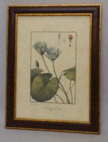 Λουλούδια & Φυτά 20  (ΚΩΔ: FP20M)