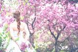 Flowers ( Code : DF23 )