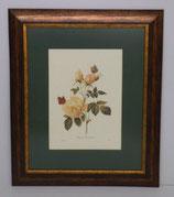 Floral & Plant 15  (Code: FP15P1)