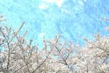 Flowers ( Code : DF15 )