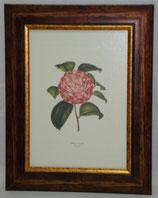 Floral & Plant 5 (Code: FP5)