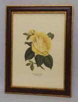 Floral & Plant 1   (Code: FP1M)