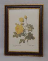 Floral & Plant 14 (Code: FP14M)