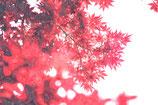 Fall / Autumn ( Code : DFA24 )