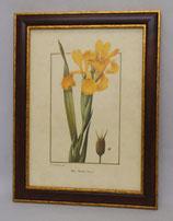 Floral & Plant 21  (Code: FP21M)