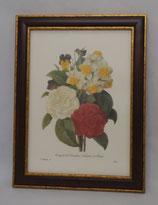 Floral & Plant 17  (Code: FP17M)