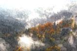 Fall / Autumn ( Code : DFA13 )
