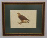 Animal & Bird 9  (Code: AB9MP1)