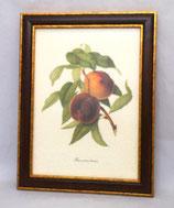 Φρούτα 8   (ΚΩΔ: F8M)