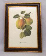 Fruit 6 (Code: F6M)