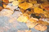 Fall / Autumn ( Code : DFA17 )