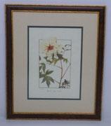 Λουλούδια & Φυτά 22  (ΚΩΔ: FP22MP2)