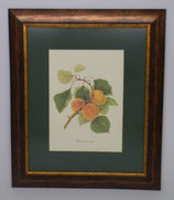 Φρούτα 3  (ΚΩΔ: F3P1)