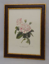 Floral & Plant 6  (Code: FP6M)