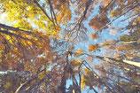 Fall / Autumn ( Code : DFA4 )