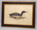Ζώα & Πουλιά 14 (ΚΩΔ: ΑΒ14M)