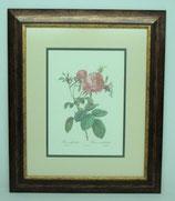 Floral & Plant 11 (Code: FP11P2)
