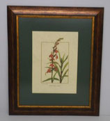 Floral & Plant 19  (Code: FP19P1)