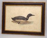 Animal & Bird 14 (Code: AB14M)