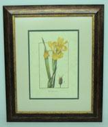 Λουλούδια & Φυτά 21   (ΚΩΔ: FP21P2)