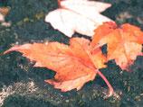 Fall / Autumn ( Code : DFA27 )