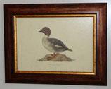 Ζώα & Πουλιά 11  (ΚΩΔ: ΑΒ11)