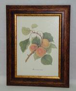 Φρούτα 3  (ΚΩΔ: F3)