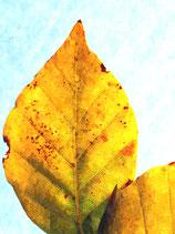 Fall / Autumn ( Code : DFA29 )
