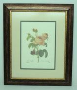 Floral & Plant 13  (Code: FP13P2)
