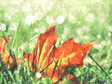 Φθινόπωρο ( Code : DFA20 )
